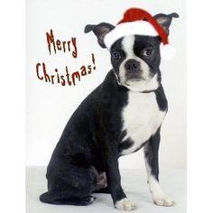 Boston Terrier Christmas card Boston Bull Terrier, Boston Terrier Names, I Love Dogs, Puppy Love, French Bulldog Rescue Network, Bulldog Names, Boston Art, Dogs And Puppies, Doggies