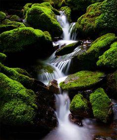 Elegant Green Moss