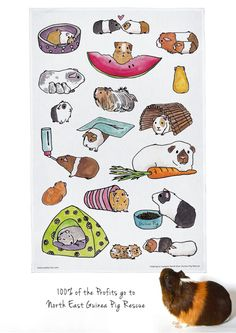 Large Guinea Pig Tea Towel. 100% of the profits go to North East Guinea Pig Rescue in the UK.