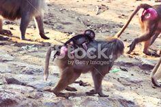 Baboon Monkey chilling in the zoo Royalty Free Stock Photo #ape #monkey #apes #Africa #animal #photography #pic #photos #stock_photography #artistic #baboon #profile #portfolio #istock