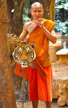 Tiger Temple, Wat Pha Luang Ta Bua, Kanchanaburi, Thailand. A funny photo with a monk sneaking a puffer. Tiger Temple is a must see and no the Tigers are not drugged