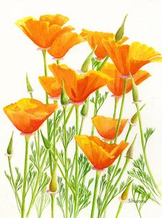 California Poppies Painting by Sharon Freeman - California Poppies Fine Art Prints and Posters for Sale