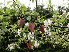 Skippertaks Huset: Hvordan få mer frukt på trærne