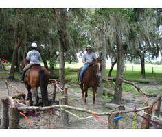 Desensitizing Course for Horses