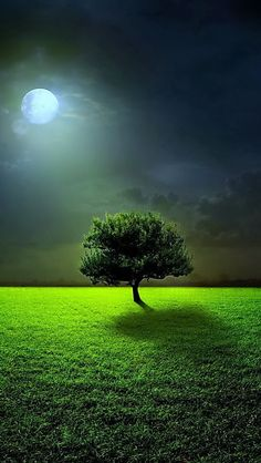 Alone With The Moon - If you like my pin please follow my board. https://www.pinterest.com/annelouise1959/colour-me-green/