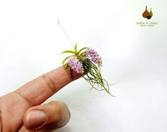 SA 002 Handmade in modeling clay - cold porcelain - Wood Ornamental flowerpots Dimensions of the plant with po. Rare Orchids, Phalaenopsis Orchid, Purple Orchids, White Orchids, Miniature Orchids, Miniature Plants, Orchids Garden, Orchid Plants, Clay Flowers
