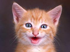 Garo sorrindo - Márcia - http://www.google.com.br/imgres?q=cat+smile=pt-BR=d=873=602=isch=uZrZwmGU-yL77M:=http://ladycatworld.blogspot.com/2010_10_01_archive.html=dkkCi0GuJ-MTjM=http://2.bp.blogspot.com/_MIAt-xPmScA/TLS9QjlSDLI/AAAAAAAAAIQ/Q2U5JyIEwvA/s1600/Cat-Smile-512X384-87.jpg=512=384=qfQfUensPIfv0QGOm4GACg=1=1t:3588,r:0,s:0,i:82=rc=436=102385020885115846344=1=172=205=0=12=110=64 -
