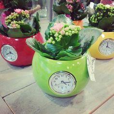 Fleurshop zet de tijd op..... Planter Pots, Flowers, Royal Icing Flowers, Flower, Florals, Floral, Blossoms