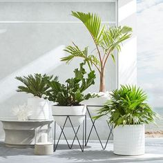 Best patio decorating ideas for A backyard guide to the essentials to make your outdoor space inviting, comfortable and functional. Read our expert tips for the perfect outdoor patio space. For more patio ideas go to Domino. Outdoor Planters, Diy Planters, Planter Ideas, Modern Planters, White Planters, Hanging Planters, Indoor Outdoor, Plantas Indoor, Pot Jardin