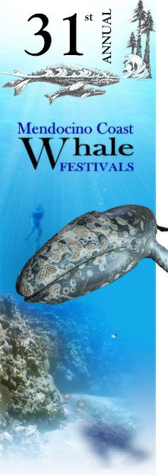 Comment us and we will give you great places to stay! MENDOCINO COAST - March 2013 - 31st Annual Mendocino Whale Festival - Mendocino + Little River + Fort Bragg