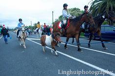 Events, Horses, Animals, Animales, Animaux, Horse, Animal, Animais, Dieren