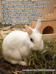 Explore and share the best bunny memes and most popular memes here on. We have huge collect of funny memes will make you LOL, check out bunny memes below! Funny Animal Memes, Funny Animals, Funny Memes, Hilarious, Significant Other, Most Popular Memes, Bunny, Lol, Explore