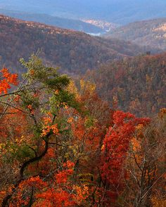 ✯ Fall Color - Ponca, Arkansas - This is something I miss about living in Arkansas!