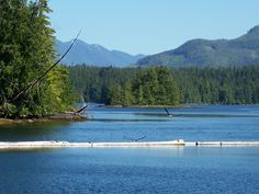 Two Eagles at the Koprino Marina Vancouver Island, Idaho, Eagles, Canada, Mountains, Travel, Viajes, Eagle, Destinations