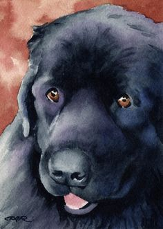 NEWFOUNDLAND Dog Art Print Signed by Artist DJ by k9artgallery