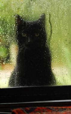 black cat in rain Animal Gato, Mundo Animal, Crazy Cat Lady, Crazy Cats, I Love Cats, Cool Cats, Kittens Cutest, Cats And Kittens, Cats Bus