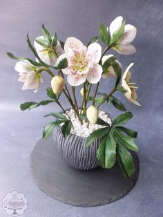 Hellebores - Cake International Silver Award - Cake by Butterfly Cakes and Bakes Icing Flowers, Gum Paste Flowers, Sugar Flowers, Butterfly Cakes, Flower Cakes, Cake International, Chocolate Crafts, Cold Porcelain Flowers, Pastry Art