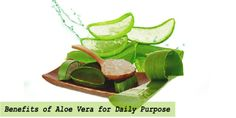 The Major Benefits of Aloe Vera Gel and How we can Use it