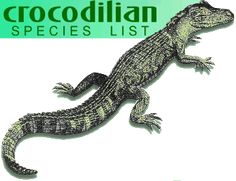 Crocodilian Species List  To go with our Alligator vs Crocodile lapbook