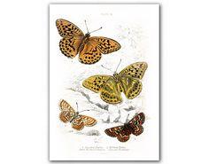 Amazing Butterflies Illustration, $11.90 http://www.etsy.com/treasury/NTI0NjQzNXwyNzIwNjg4MDYx/yum  #vintage #art #681team