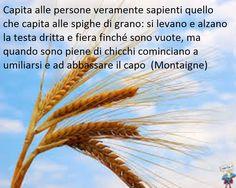 Più ci si avvicina alla saggezza più si comprende il valore dell'umiltà(Gian) ...................More you approach to the more wisdom more you understand the value of the humility