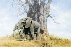 David Shepherd - Baobab and friends