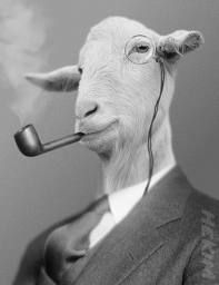 A goat smoking a pipe