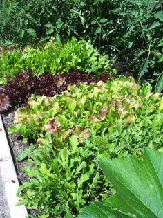 Fun blog post about a new gardener's sense of wonder at her first food growing experience http://www.milkglasskitchen.com/urban-gardening/