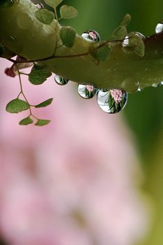 Tears of nature... Go Green and save the earth! Photo by Ryuko-Mizu