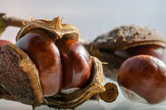 Ovaj napitak garantovano leči bolesne vene i hemoroide – Recept Cocoa, Chestnut Horse, Sausage, Stuffed Mushrooms, Keto, Fruit, Vegetables, Autumn Nature, Cleaning