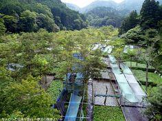 日本一のわさびの里「筏場のわさび田」/狩野川台風の記憶「筏場の大崩壊」