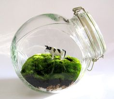 Cow in moss. jar garden. air plant for a tree. cow may be replaced for fairy
