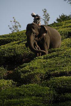 elephant ridding : attraction Kalpetta in kerla india