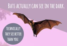 """I can't see! I'm blind as a bat."" 