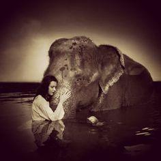 Photographer  Richard Kay Kardhordo took this wonderful elephant shot in Koh Chang