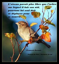 Savourer la vie #88 Gervais, Birds, Animals, Pictures, Lyrics, Life, Quote, Animales, Animaux