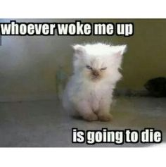 Baby Animals Being Grumpy Old Men Funny cats. For more funny cat quotes visit /lol-funny-cat-pic/Funny cats. For more funny cat quotes visit /lol-funny-cat-pic/ Funny Animal Memes, Cute Funny Animals, Funny Animal Pictures, Cute Baby Animals, Funny Memes, Funny Dogs, Funny Sayings, Funny Cat Pics, Funny Cat Quotes