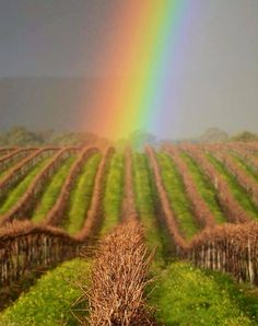 McLaren Vale SA | http://www.viewretreats.com/mclaren-vale-fleurieu-peninsula-luxury-accommodation #travel