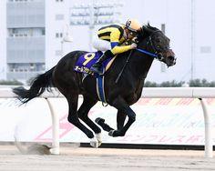 ゲートで好発進したオールブラッシュは、3馬身差をつけ川崎記念を制した