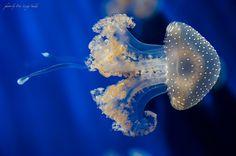 Photo Medusa par Pier Luigi Saddi sur 500px