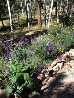 "Here is my flower garden. Milorganite and anti deer spay keep the elk and deer away. Careful plant selection helps. Check out the book ""Deer in my Garden"" for helpful hints on plants to choose for deer resistance."