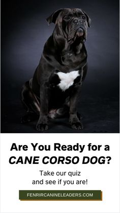 Are you interested in getting a Cane Corso but not sure if you are ready for one yet? Take our quiz to find out if you are prepared for one of these incredible Mastiffs or not. Learn more from Fenrir Canine Leaders! Cane Corso Dog Breed, Mastiff Dog Breeds, Guard Dog Breeds, Best Dog Breeds, Large Dog Breeds, Large Dogs, Best Dogs, The Perfect Dog, Separation Anxiety