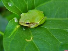 Background images - Frogs: http://wallpapic.com/animals/frogs/wallpaper-33009