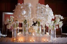 Table - Phalaenopsis Orchids