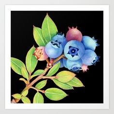 Wild Maine Blueberries Art Print - watercolour illustration by artist #PatriciaSheaDesigns - thank you buyer!