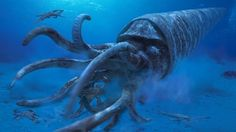 Cameroceras - could reach up to 30 feet in length, was probably the largest marine predator during the Paleozoic era, navigated the deep sea and was almost blind. Lazy drifter like its closest modern relative, the Nautilus
