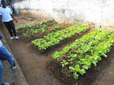 Horta orgânica feita para aula pratica.