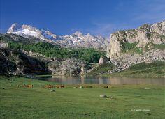 LAGO ERCINA: Los lagos de Enol y La Ercina, uno de los lugares más visitados del Parque Nacional de los Picos de Europa, constituyen un bello ejemplo de paisaje de origen glaciar, rodeados de amplias majadas dedicadas al pastoreo de verano.