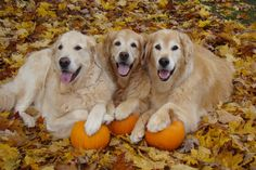 Golden Leaves and Golden Paws with Ben, Brie and Tyler