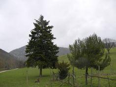 ABBAZIA  SAN SALVATORE - Poggio san Romualdo - Loc. Valdicastro 31 Fabriano (AN) www.valdicastro.it/valdicastro/page23_italian
